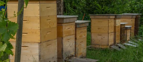 Unser Bienenstand | Imkerei Eberle