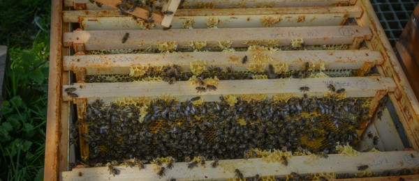 Bienenbeute Dadant offen | Imkerei Eberle